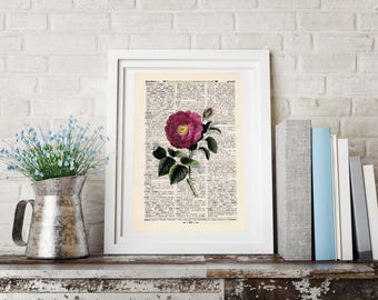 Print - PINK ROSE - antique book page