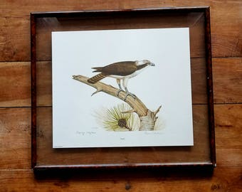 Dennis Puleston Signed Print, Dennis Puleston Art, Puleston Prints, Wildlife Art,  Wildlife Prints