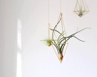 Himmeli Hexahedron Nr02 inklusiv Luftpflanze Pflanzenhänger Geschenkidee Zimmerpflanzen