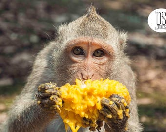 Monkey Picture,Monkey Digital print,Imagen de mono, Cambodian Monkey digital print,Monkey Image,Poster Print,Animal printable,angkor wat ape