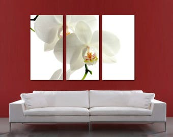 White Orchid Flower Canvas Print Wall Art