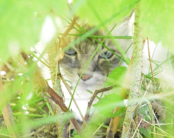 Cat in the jungle, wallpaper, Screen saver,  Poster, DOWNOADABLE photography