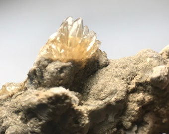 Extra Small Golden Calcite Crystal Cluster on Ancient Clam Fossil Matrix | Rucks Pit, FL | 1.7-2.2Myo