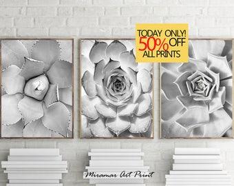 Black and White Prints, Triptych Prints, Set of 3 Prints, Cactus Cacti Prints, Cactus Photo, Coastal Wall Art, Modern Mexican Print