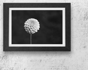 Photography - Flower