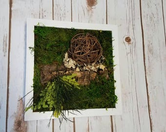 Moss wall art with natural cork wood and twig ball