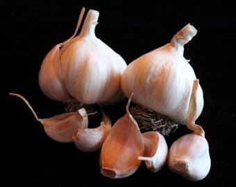 Certified Organic Culinary Garlic by the pound