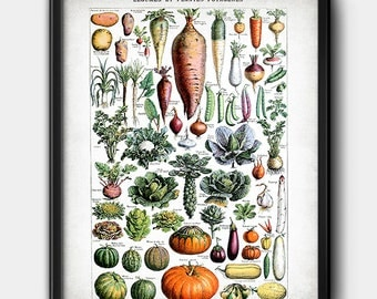 Vegetables · 1920s · Legumes · French Dictionary · Vintage · Instant Download · Printable  #181