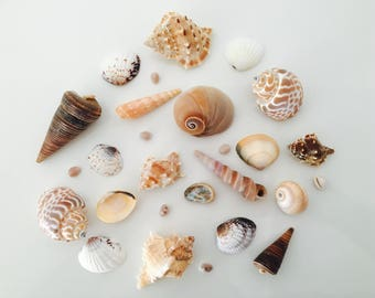 Shell - shell - crafting