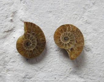 Ammonite. 2 Pcs. S0554