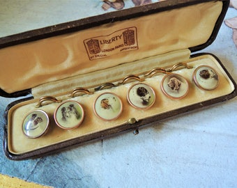 Vintage Antique Sepia Dog Button Stud Set in Original Liberty Box