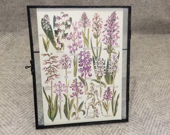 Vintage framed botanical drawing, flower illustrations, botanical print, floral, in glass frame, Green leaves Purple Lavender
