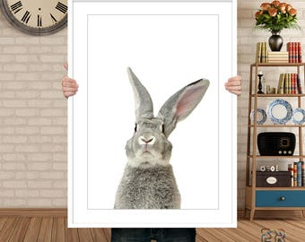 Rabbit Print, Bunny Print, Grey Rabbit, Animal Wall Art, Rabbit Poster, Animal Print, Printable Wall Art, Rabbit Photo