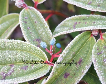 Nature Photograph - Winter Photography - Color Photograph - Fine Art Photography
