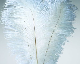 Ostrich Feathers | Ostrich Plumes | White Feathers | Wing Feathers