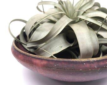 Low Ceramic Studio Pottery Bowl // Vintage Pottery // Signed Studio Pottery // Ceramic Purple Bowl