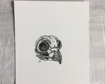 Owl Skull Drawing