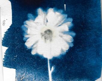 Singler, Flower Cyanotype - 2016