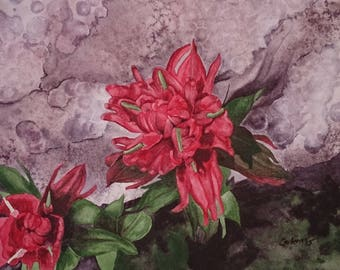 Indian Paintbrush, Set of 5 Note Cards with Envelopes from Original Watercolor Painting