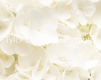 White hydrangeas print, flower, flowers print