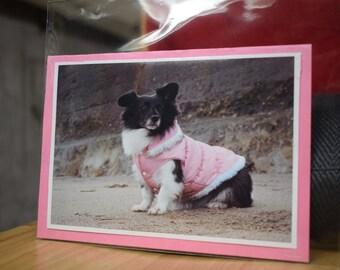 Daisy Doo - Pink Coat Poser