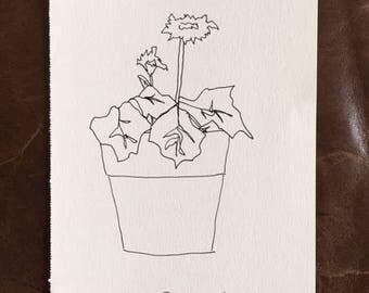 "Original Ink Drawing ""my new Daisy plant"""