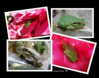 Photo memory tree frog green frogs on various media 30X40cm
