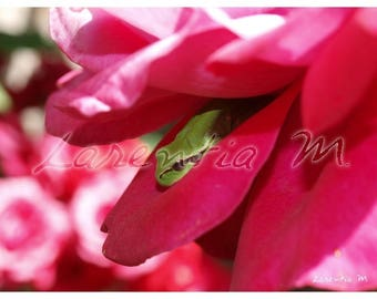 Photo 30X40cm frog green frog in rose pink