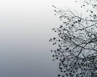 Branches and Water, Fine Art Photography, Broadmoor, MA
