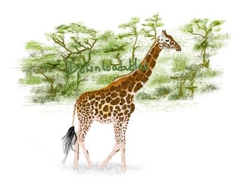 Giraffe poster. Hand drawn using a digital drawing pad. Acrylic style.  Downloadable printable poster. printable wall art