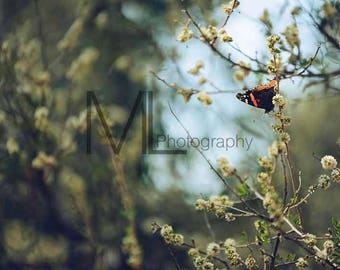 Beautiful Butterfly Photo 2, butterflies, insect, wall art, home decor, nature photography, butterfly photography, Digital Download