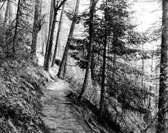 Art Photograph-- Forest Path--Gifts for her, him, man, woman, woods, landscape, retro, wall art, decor, minimalist, tree, black and white