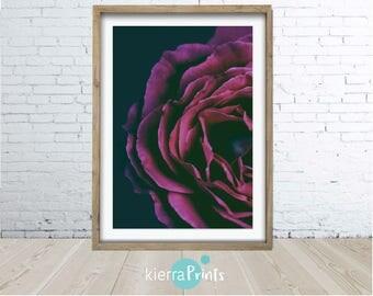 Magenta Rose, Bloom, Rose Print, Boho Floral Wall Art, Digital Print, Floral Poster, Gift, Modern Photography