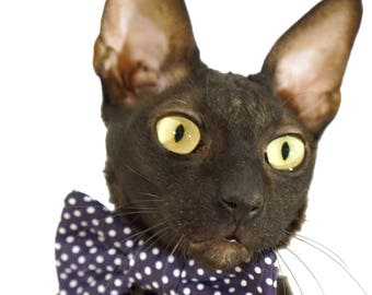 Kotomoda CAT WEAR  Bow tie navi blue