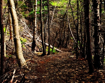 Wooded Path photo print