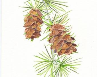 Watercolour Pinecones