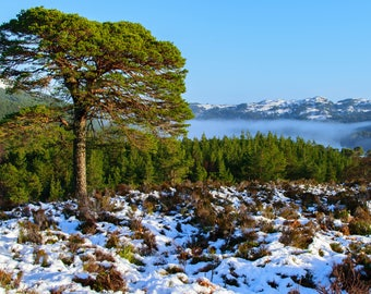 """Stand Alone, Glen Affric : 5"""" x 7"""" Greeting Card, Blank inside, with envelope"""