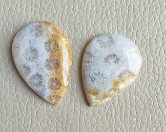 Natural Fossil Coral Cabochon Size 38x25x7, 33x25x6 MM Approx, Good Quality Fossil Coral Cabochon, Fossil Coral Weight 75 Carat Gemstone.