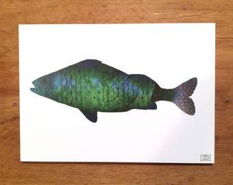 Postcard, greeting card, fish card