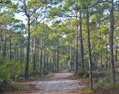Framed Pine Forest