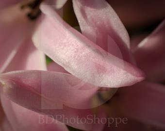 Pink Hyacinth | Macro Photo Art | Nature Lover Gift | Fine Art Photography | Personalization | BDPhotoShoppe | Home Office Decor
