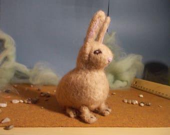 round rabbit
