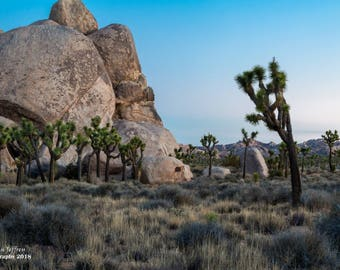 A lonely rock in Joshua Tree