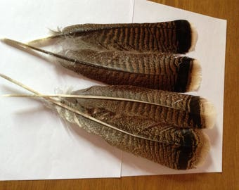 4 Large American Turkey feathers