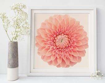 Dahlia Flower Photography, Floral Wall Art, Floral Wall Decor, Modern Botanical Print, Large Wall Art Print, Fine Art Photography Print
