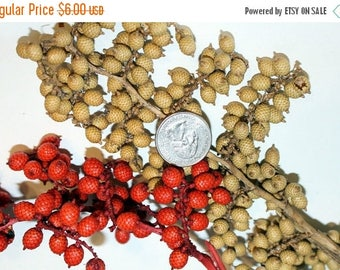 Save25% Canella Berries dried  2 Oz  on stems in 5 beautiful Colors-Green-Red-Natural-Brown-Weathered