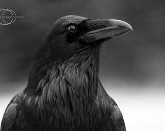 8x10 raven black and white photography print