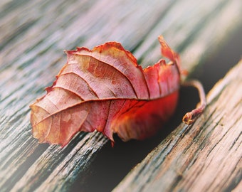 Red Leaf Photograph, Fall Leaves, Autumn Colors, Wall Art Print - nature photography, rustic art for walls, Prints for Home, Photo of leaf