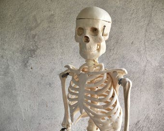 "32"" school display skeleton anatomy model on cast iron stand Halloween decor"