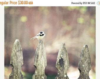 Chickadee Photograph, Bird Art, Bird on Fence Print, Nature Photography, Black Capped Chickadee, Bird Home Decor 8x10